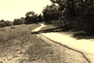 cotton road